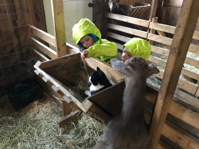 Zion and Lijah playing with a cat in a barn feeding trough