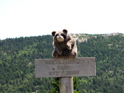 Washington racoon (a puppet) on top of the sign for the North Bubble summit