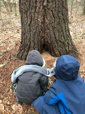 Zion and Lijah looking at a hole in the base of a tree