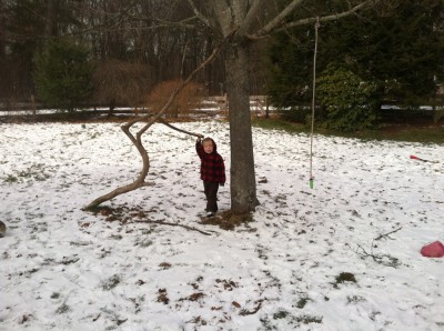 Zion by the tree in the middle of the yard, with extra climbing limb and swinging rope