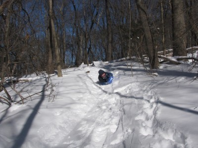 Harvey sledding down a path in the woods