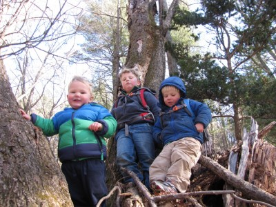 the three boys in a tree