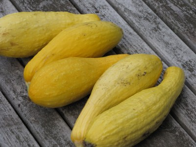 yellow squashes on the table