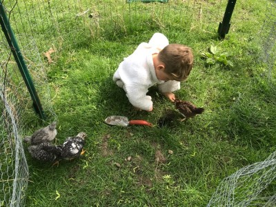 Lijah playing outside with the young hens