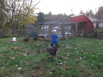 zion chasing chickens